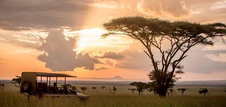 Game drive at Singita Sabora, Serengeti, Tanzania