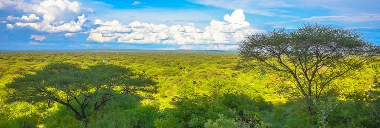 View from Tarangire Sangaiwe