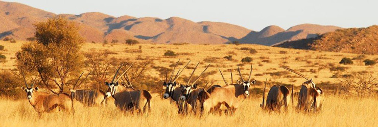 Tswalu is known for rare and exciting wildlife