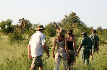 Walking Safari, Plains Camp, Kruger Park, South Africa