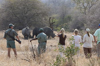 Walking Safari viewing rhino, Plains Camp, Kruger Park