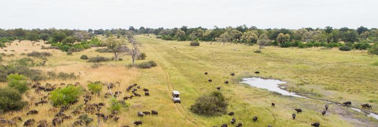 Buffalo from the air, near Camp Xaxanaka