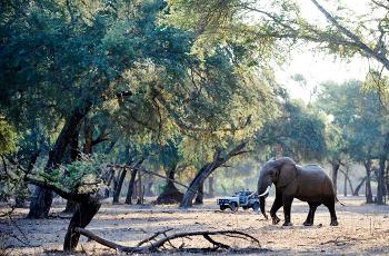 Open woodland near Old Mondoro, Lower Zambezi, Zambia