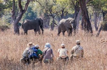Walking Safari, Chikoko Trails Camp, South Luangwa