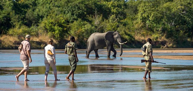 Elephants on foot, South Luangwa, Zambia