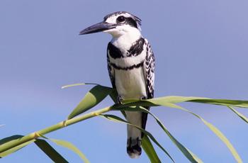 Birdlife is prolific along the Chobe River