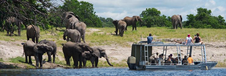 Boat based game viewing is spectacular, Chobe River
