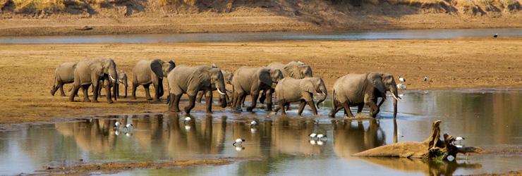 Elephants crossing a river, Zambia