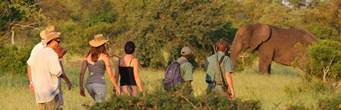 Walking safari conducted at Plains Camp, Kruger Park