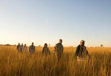 Walking are among the safari activities at Camp Okavango