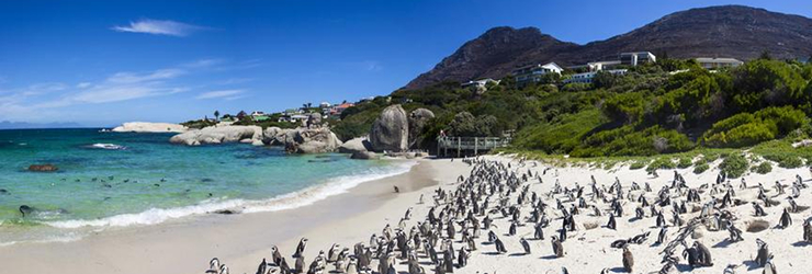 Boulders Beach at Simonstown is home to a colony of African penguins