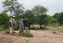 A 2 - 3 hr day walk conducted at Umlani Bushcamp, Timbavati