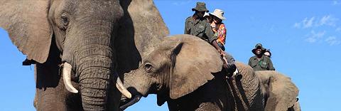 Elephant Back Safaris, near Addo, Eastern Cape