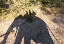 Elephant Back Safari, Victoria Falls