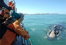 Whaling season at Grootbos