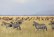 Grumeti, Serengeti, Tanzania