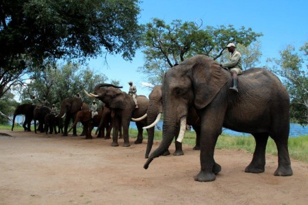 Elephant experience in Zambia