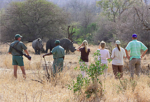 Walking Safari, Plains Camp, KNP