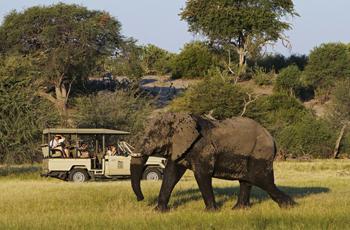 Le Roo la Tau, northern Botswana