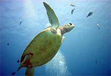 Marine life near Ras Nungwi Beach Hotel, Zanzibar