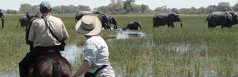 Horseback safaris in the Okavango