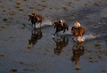 Horse safaris, Okavango Delta