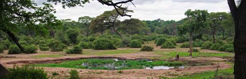 Chobe, Botswana (image courtesy M.E Chidiac)