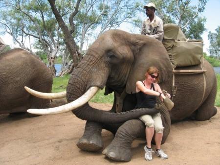 Elephant experience, Livingstone - Zambia