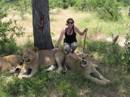 Lion encounter, Zambia