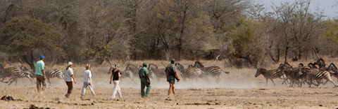 Walking safaris, Kruger Park