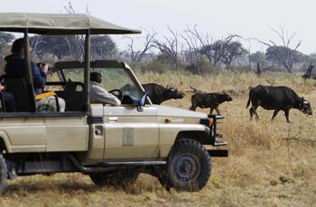 On safari, Savute Safari Lodge, Botswana
