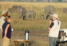 Chobe Safari Lodge game drive