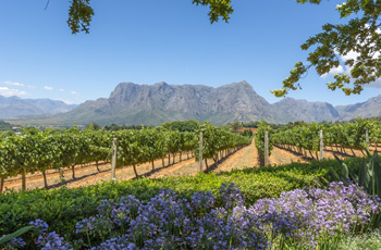 Cape Winelands, near Cape Town