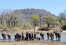 On safari near Singita Pamushana Lodge
