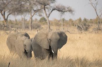 Elephants are in abundance in Hwange National Park