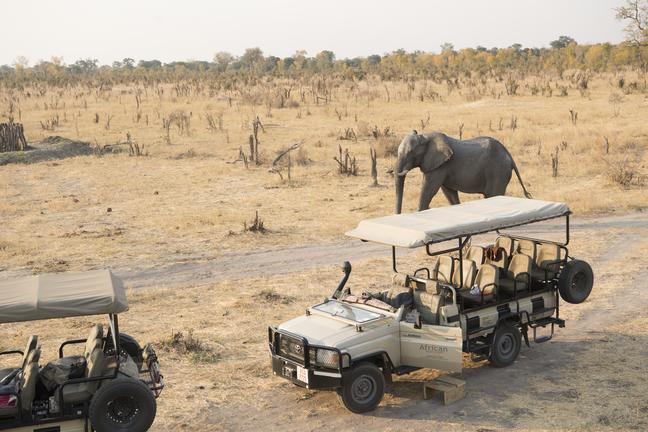 Elephants are in abundance in the Hwange National Park