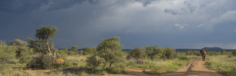 Thunderstorm brewing in Botswana
