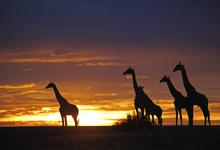 Botswana dry season sunset
