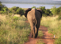 African Overland Tours