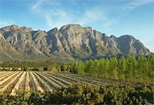 Vineyard near Franschhoek Country House