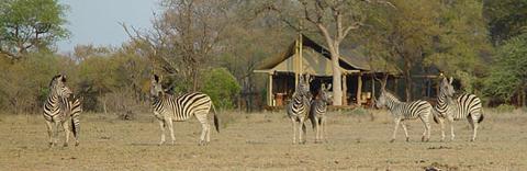 Plains Camp, Kruger National Park