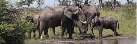 Xaxanaka Camp, Moremi Game Reserve, Okavango Delta
