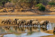 Dry Season, Elephants, Zambia