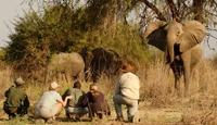 7 Night Zambia in a Week Fly In Safari